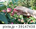りんご アップル リンゴの写真 39147438