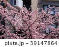 大寒桜(オオカンザクラ)とマンション 39147864