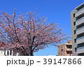 大寒桜(オオカンザクラ)とマンション 39147866