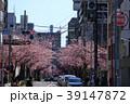 大寒桜(オオカンザクラ)の並木道 39147872