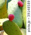 植物園 39148589