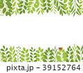 葉 新緑 フレームのイラスト 39152764