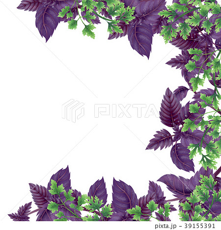 Illustration of Basil and parsley. Decor of liane. 39155391
