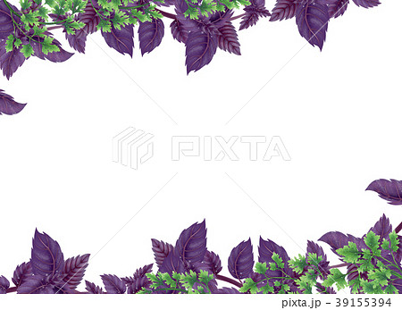 Illustration of Basil and parsley. Decor of liane. 39155394