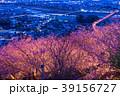 河津桜 春 夜桜の写真 39156727
