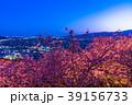 河津桜 春 夜桜の写真 39156733