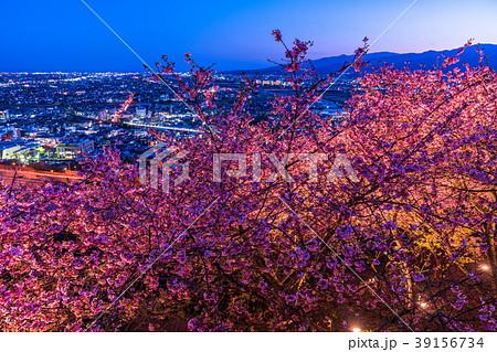 《神奈川県》夜桜の丘・松田町 39156734