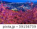 河津桜 春 夜桜の写真 39156739
