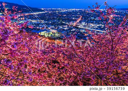 《神奈川県》夜桜の丘・松田町 39156739