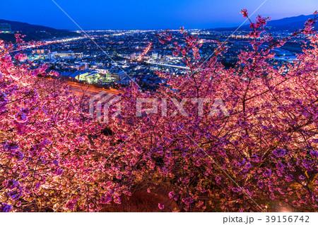 《神奈川県》夜桜の丘・松田町 39156742