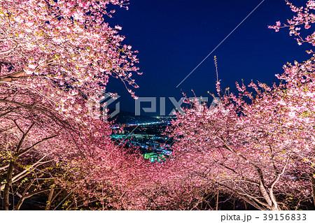《神奈川県》夜桜の丘・松田町 39156833