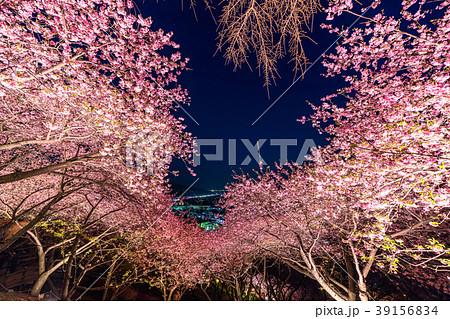 《神奈川県》夜桜の丘・松田町 39156834