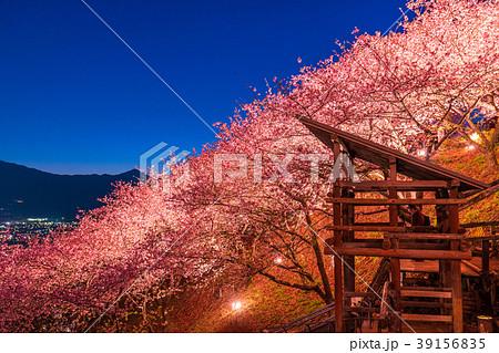 《神奈川県》夜桜の丘・松田町 39156835