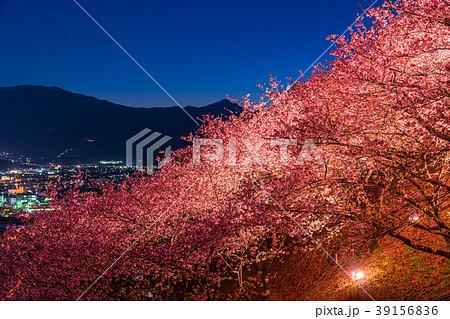 《神奈川県》夜桜の丘・松田町 39156836