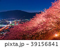 河津桜 春 夜桜の写真 39156841