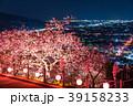 河津桜 春 夜桜の写真 39158233
