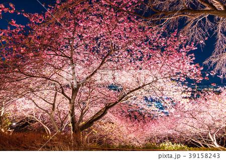 《神奈川県》夜桜の丘・松田町 39158243