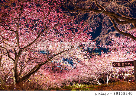 《神奈川県》夜桜の丘・松田町 39158246
