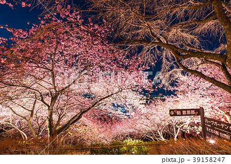 《神奈川県》夜桜の丘・松田町 39158247