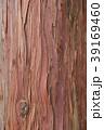 檜(ヒノキ)の樹皮 39169460