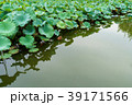 植物 葉っぱ 葉の写真 39171566