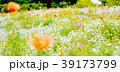 花畑 39173799
