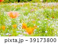 花畑 39173800