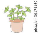 植物 鉢植え 39174160