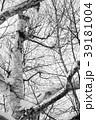白樺(モノクロ)) 39181004