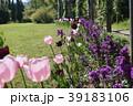 松阪ベルファームのチューリップ 39183106