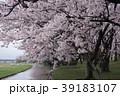 宮リバ度会ーの桜 39183107