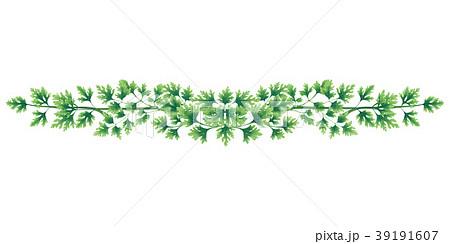 Illustration of vignette of green parsley 39191607