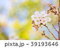 桜 開花 春の写真 39193646