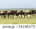 セレンゲティ国立公園 39196373