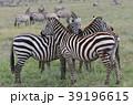 セレンゲティ国立公園 39196615