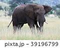セレンゲティ国立公園 39196799