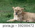 セレンゲティ国立公園 39200472