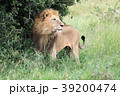 セレンゲティ国立公園 39200474