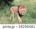 セレンゲティ国立公園 39200481