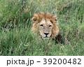 セレンゲティ国立公園 39200482