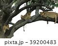 セレンゲティ国立公園 39200483