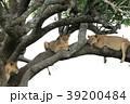 セレンゲティ国立公園 39200484