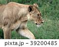 セレンゲティ国立公園 39200485