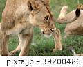 セレンゲティ国立公園 39200486