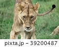 セレンゲティ国立公園 39200487