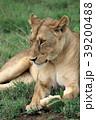 セレンゲティ国立公園 39200488