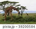 セレンゲティ国立公園 39200584