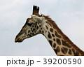 セレンゲティ国立公園 39200590