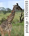 セレンゲティ国立公園 39200593