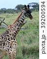 セレンゲティ国立公園 39200594